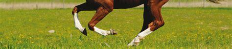 equipower glukosaminpellets mehr beweglichkeit und