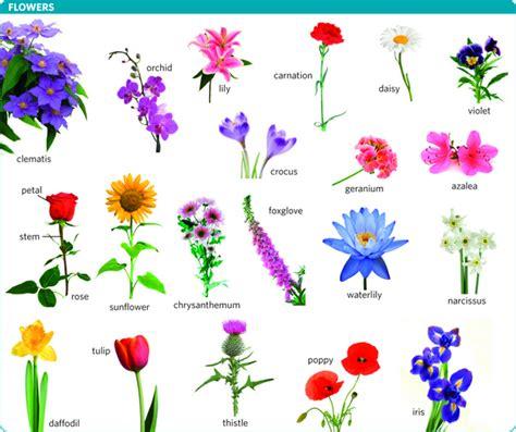 flower translation  flower  longman english japanese