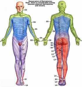 Anatomy D503  U0026gt  Saxon  U0026gt  Flashcards  U0026gt  Anat D503 Study Guide
