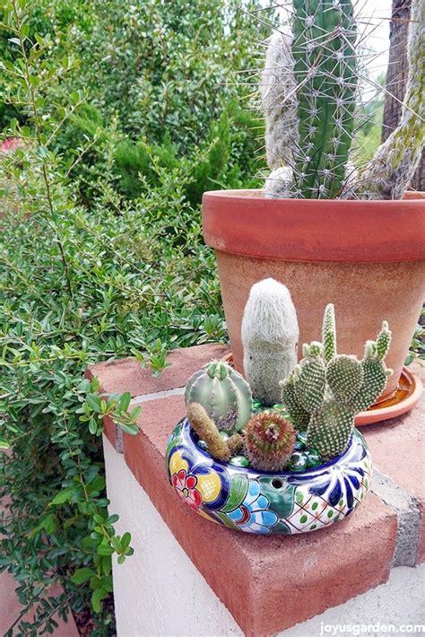 cactus dish garden 2 cactus dish garden makeovers