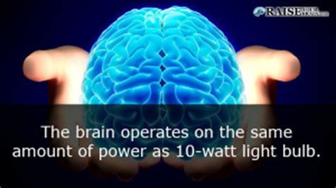 33 human facts brain parts and functions