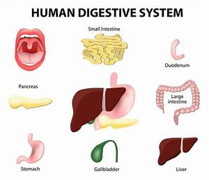 Signs Of Digestive System Problems  And How To Restore