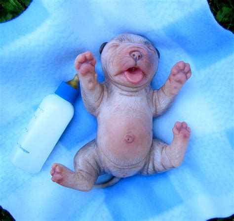 21 Cutest Baby Animals Ever