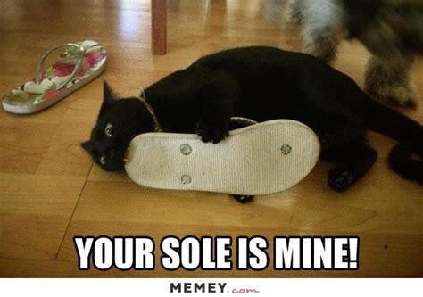 Mine Meme - cat memes funny cat pictures memey com