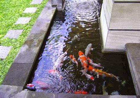 desain kolam ikan minimalis bernuansa eksotis  energik