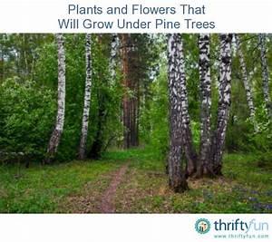 46 Best Flowers Under Trees Images On Pinterest