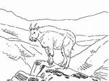 Coloring Goat Mountain Outline Animal Amazing sketch template