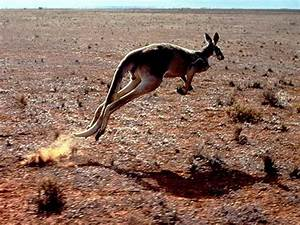 Information about Australian Desert Animals List - yousense info