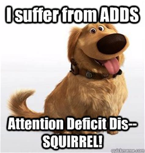 Squirrel Meme - distracted memes image memes at relatably com