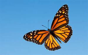 The Incredible Life Cycle Of The Monarch Butterfly