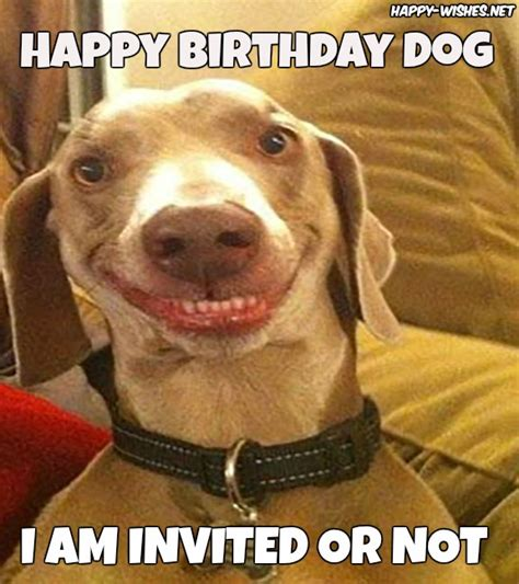 Dog Lover Meme - happy birthday wishes for dog quotes images memes