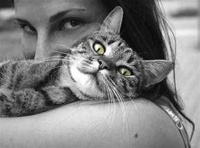 cat smell out of carpet how to get cat smell out of carpet odor expert