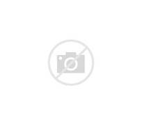the australasian funnel web spider is another spider that has