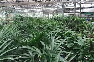 Acheter Des Plantes : o acheter des plantes et des fleurs singapour ~ Melissatoandfro.com Idées de Décoration