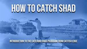 How To Catch Shad Program Introduction From Catfish Edge ...