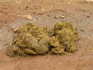 Dung Beetles – For Cleaning Up Dog Droppings | Walter ...