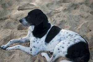 Black And White Dog Animal Pictures