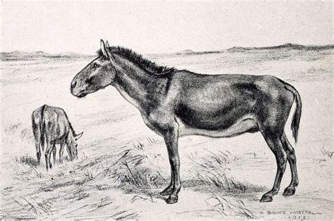 megafauna horse north american extinct