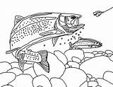 Trout Coloring Pages Apache Fisherman Bair Chasing Fishing Template Colouring Tocolor sketch template