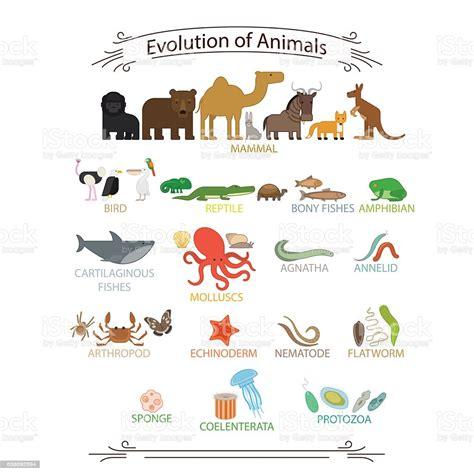 Biological Evolution Animals Stock Illustration Download