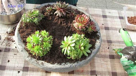 Dekoration Für Garten  Sukkulenten Hauswurz In