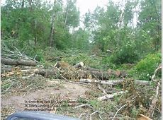 Trees blocking the road to St John's Group Camp at St