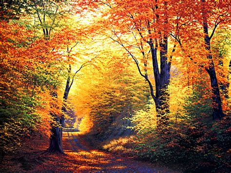 Autumn Wallpapers Free autumn wallpapers hd free autumn wallpapers hd