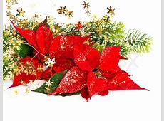 Christmas Poinsettias – Niwot United Methodist Church