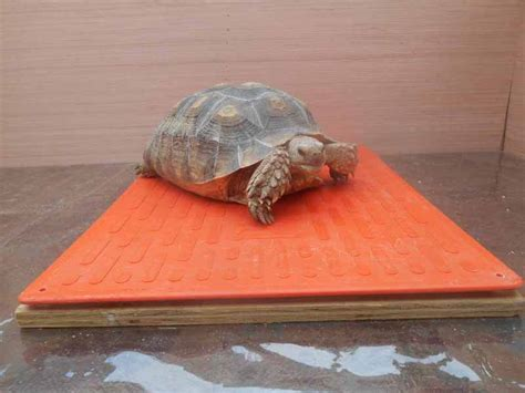 Best Heat Ls For Turtles by The Original Stanfield Pet Heating Pad For Dogs Cats