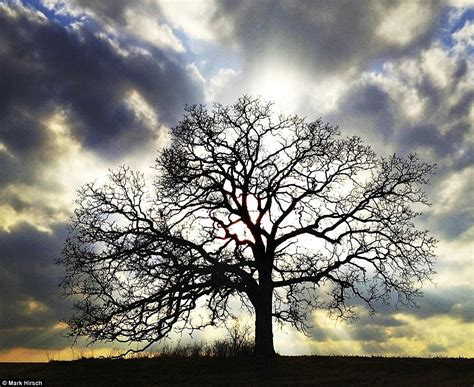 A Year In The Life Of A Tree Photographer Uses His Iphone