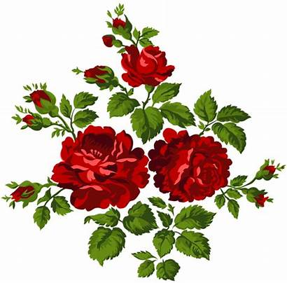 Roses Rose Clipart Clip Transparent Yopriceville Garden
