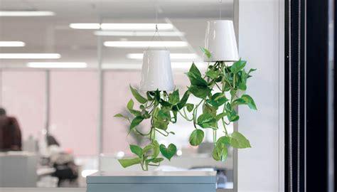 boskke sky planter boskke sky planter ambius australia