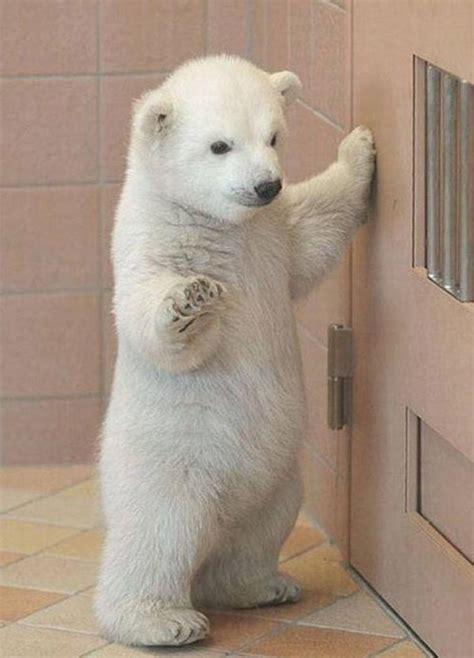 fotos de animales bebes  te haran morir de ternura