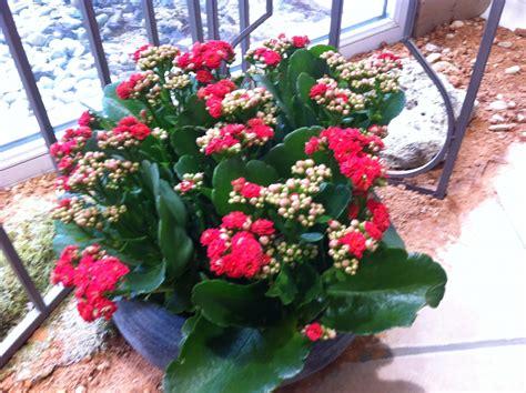 bureau de poste besan輟n plantes grasses fleuries interieur 28 images plantes grasses int 233 rieur 224 fleurs pivoine etc kit composition de plantes grasses plat en