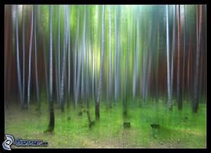 Bilder Bäume Gemalt : gemalte b ume ~ Orissabook.com Haus und Dekorationen
