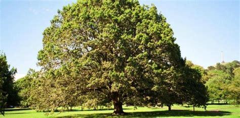 alberi  organizzazione aziendale il noce