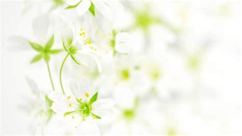 trend terbaru background bunga putih pink fatiha decor