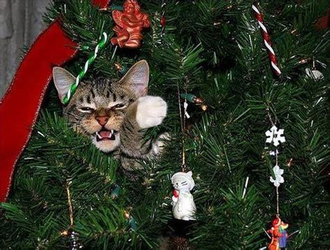 when cats climb the christmas tree