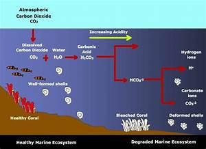 Digging Deeper  Ocean Acidification