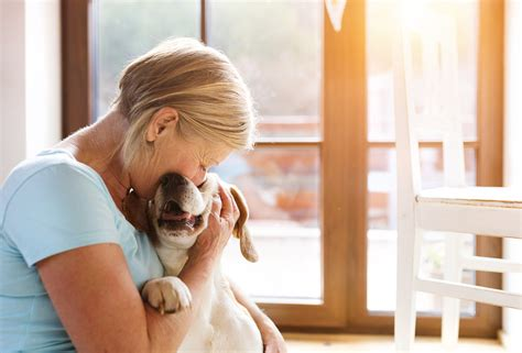 Study: Do shelter dogs benefit from short-term foster ...