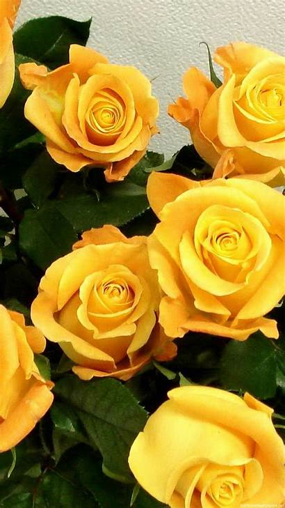 Yellow Wallpapers Phone Flowers Iphone Rose Roses