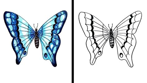 realistic butterfly drawing    clipartmag