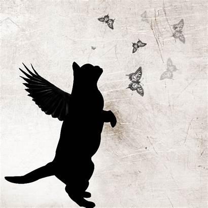 Cat Angel Cats Angels Tattoos Tattoo Rainbow