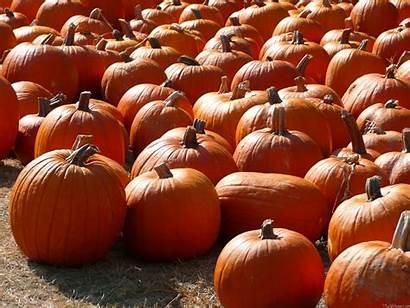 Pumpkin Pumpkins Fall Desktop Autumn Wallpapers Patch