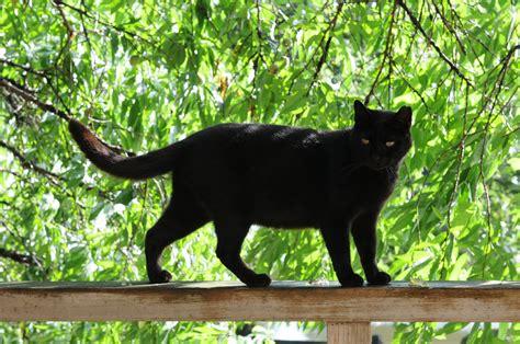 welke bekende warrior cat ben jij uitkomsten quizletnl