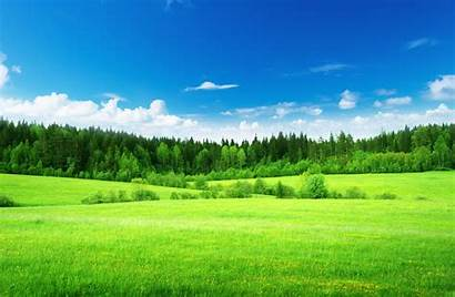 Grass Nature Forest Sky Field Tree Clouds