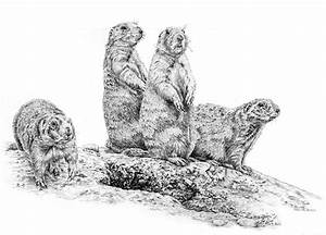 How to draw prairie dogs