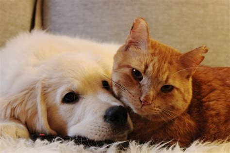 puppy   win   heart   ginger cat  month