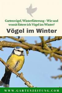 Poolabdeckung Winter Selber Bauen Wie : gartenv gel im winter v gel im winter winter und ~ A.2002-acura-tl-radio.info Haus und Dekorationen
