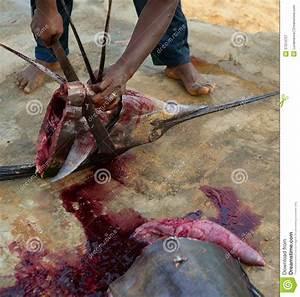 African Man Cutting The Sailfish Marlin To Clean Fish ...